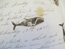 The whaleship logbooks are illustrated with many drawings of whales sighted or killed.