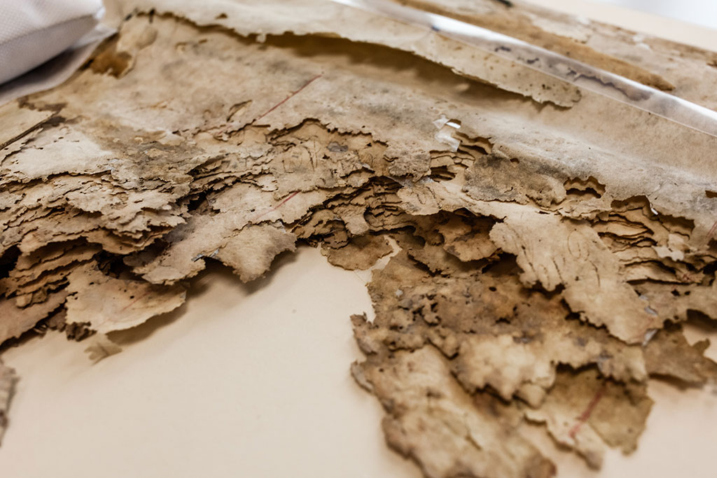 Mold and insect damage to the 1861 Constitution