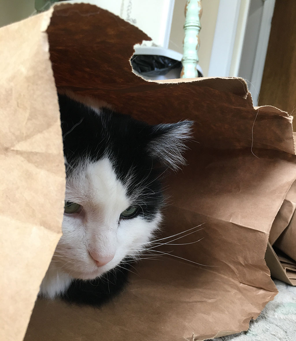 Cat not out of the bag yet.